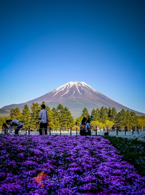 Visitors enjoying a great view of Mt. Fuji