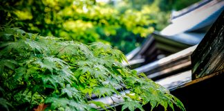 Visiting Ryoan-ji temple in Kyoto