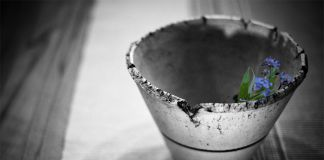 damaged clay pot with blue flower